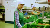 木箱 : Young women sorting peaches to crates and checking quality at warehouse on factory 動画素材