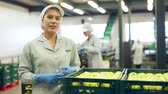木箱 : Young woman in uniform during sorting at warehouse at apples factory 動画素材