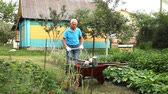 kruiwagen : Elderly gray-haired man working in the garden Stockvideo