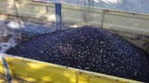 emelvény : Olives harvest season. Pile of freshly picked olives loaded into truck