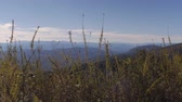 dumanlı : Dolly wide establishing shot of Blue Ridge Mountains near Asheville North Carolina that are part of the Appalachian Mountains and Smoky mountains with dried flowers, grass, and foliage in foreground with blue sky and clouds in background.