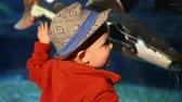 deniz yaşamı : a little toddler looking at the fish in an aquarium