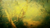 vegetação : a traveling underwater shot of stagnant water in pond