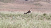 ana : Antelope Mother with Newborn Baby