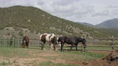 родословная : Horses graze at a beautiful ranch in Utah Стоковые видеозаписи