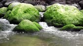 fantezi : Large moss covered boulders in a stream. Stok Video