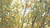 солнечные лучи : fall colors and sunlight through leafs