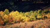 сосна : fall leaves in the mountains panning shot