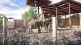 marfim : Family of Elephants at the Zoo