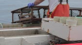 linha de costa : commercial fishermen trapping lobster
