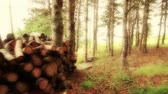 pirzola : Fire wood pile in forrest Stok Video