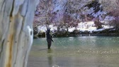 emaranhado : Fly Fisherman in Beautiful River Stock Footage