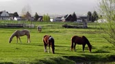 mare : Horses Graze and Sunrise Stock Footage