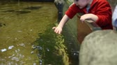 ploutve : a little toddler looking at the fish in an aquarium