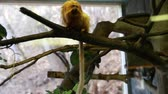 macaco : monkeys in captivity in zoo