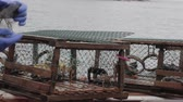 pescador : fishermen catching lobster on a boat in nova scotia canada Stock Footage