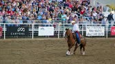 corajoso : A cowboy calf roping at the rodeo