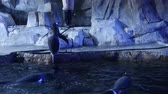 pinguine : Gentoo Pinguine im kalten Aquarium Videos
