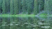 emaranhado : Gorgeous reflection in the mountain lake water with bugs Stock Footage