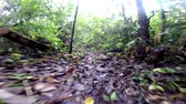 Jungle Kreatur durch Spur scampering - POV
