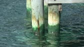 причал : Pier Pilons with Waves (HD). Wooden poles sustain a boat dock with waves crashing in its mossy surface.