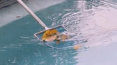 file : Cleaning Leaves From Pool (HD 24p). Swimming pool being cleaned of leaves with a blue aluminum and nylon net.