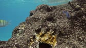 cozumel : Coral Eating Fish Stock Footage