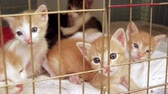abrigo : Kittens in Shelter Cage