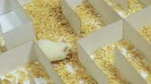точка зрения : Rat on Maze Eats Cheese (HD). A Rat Maze built for this shoot shows a white rat eating a piece of cheese.