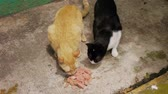бедность : Two Alley Cats eating canned food on a sidewalk.