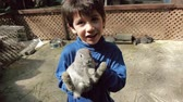 сарай : Hispanic Kid Petting Grey Rabbit on the Head. Стоковые видеозаписи