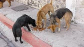 ztracený : Three Homeless Dogs Eating Solid Dog Food On the Sidewalk While a fourth arrives.