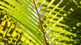 esverdeado : Close up of a Green leaf in nature