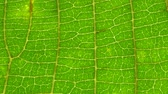 bylinný : Macro shot of green leafs and plants been analyzed