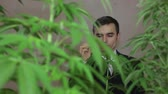 birtok : Detail of a businessman with Cannabis plants smoking Marijuana joint.