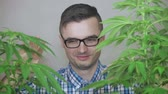 madman : Crazy stoned geek grimacing and enjoying Cannabis plants.