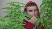 birtok : Man in hoodie smoking Marijuana joint.