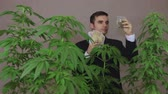 shopping bag sale : Successful businessman with Cannabis plants and Marijuana products enjoying earned money.