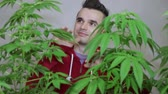 birtok : Happy punker touching his cultivated Cannabis plants.