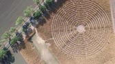 doolhof : Labyrinth, Corn field, Aerial drone Stockvideo