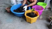 tomurcukları : plant a tree to pot