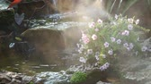 sunlights : fog steam with waterfall in the garden Stock Footage