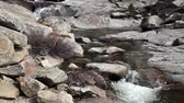 yosemite : Mountain Stream Along Chilnualna Trail Yosemite Stock Footage
