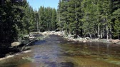 borovice : Merced River Yosemite Park California Flowing Between Trees