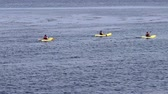 záliv : Monterey, California, United States - October 17, 2015: Kayaks Paddling On Still Water Popular Tourist Destination
