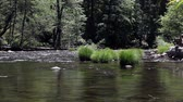 yosemite : Merced River Yosemite National Park California Green Trees Stock Footage