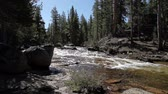 yosemite : Small River Flowing Among Pine Trees Yosemite California Stock Footage