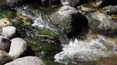 Small Stream Flowing Over Mossy Rocks Tight Shot