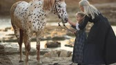 sahip olan : Therapy with horses hippo therapy. Woman in classic dress and mottled horse Stok Video