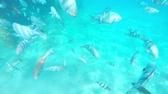 submarino : Tourists snorkeling with exotic fishes in the crystal clear waters of israel red sea Vídeos